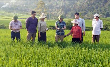 Cán bộ Phòng NN&PTNT huyện Trạm Tấu hướng dẫn người dân phòng trừ sâu bệnh hại lúa.
