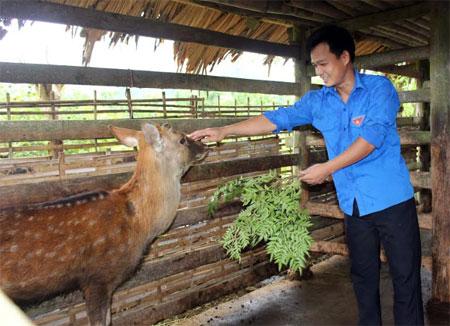 Anh Nguyễn Chí Châu chăm sóc đàn hươu sao.