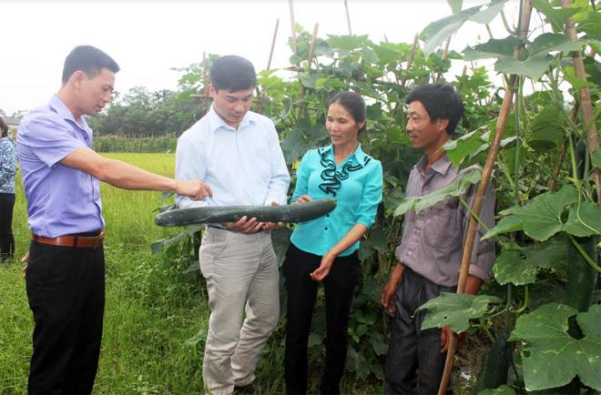 Lãnh đạo xã Phúc Lộc cùng các đại biểu tham  qua mô hình trồng bí xanh cho thu nhập cao của chị Trần Thị Lan ở thôn Đông Thịnh.