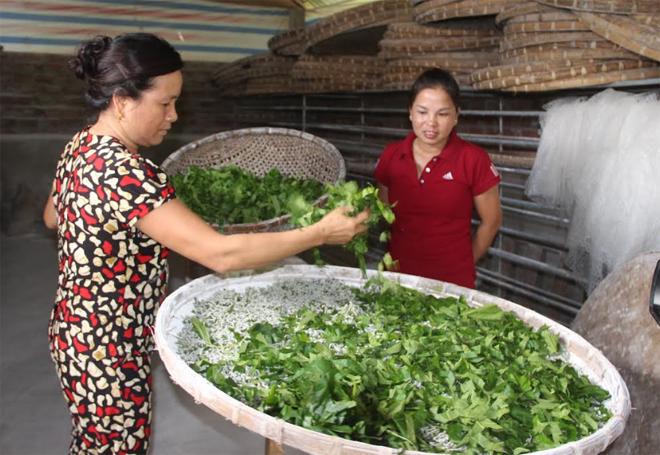 Cán bộ hội viên đã tham gia tích cực chuyển đổi diện tích canh tác kém hiệu quả sang trồng dâu nuôi tằm. (Ảnh: Minh Huyền)