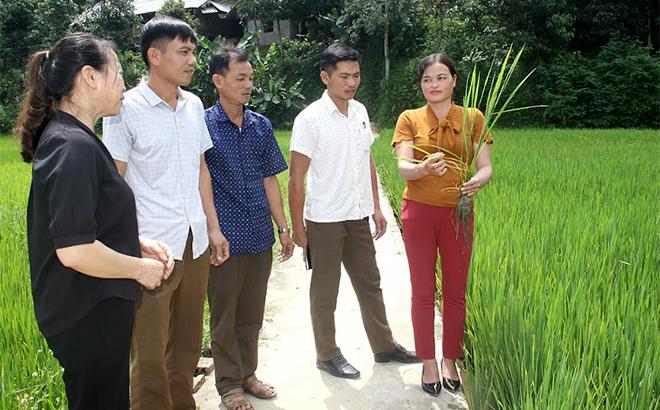 Chị Hà Thu Dậu cùng các đảng viên trong Chi bộ thôn Yên Thịnh, xã Kiên Thành kiểm tra sản xuất lúa vụ mùa.