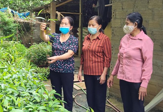 Thành viên CLB Liên thế hệ tự giúp nhau thôn Cầu Yên, xã Phú Thịnh, huyện Yên Bình trao đổi kinh nghiệm trồng quế.