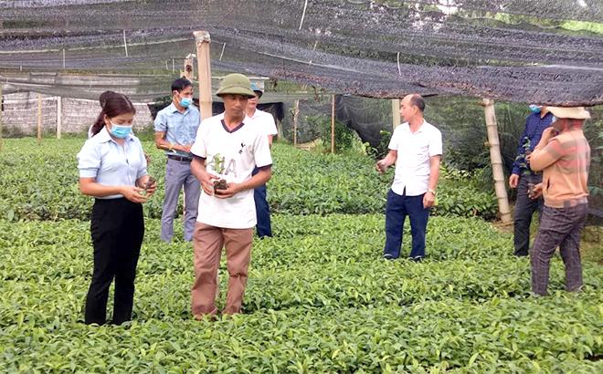 Lãnh đạo xã Phú Thịnh kiểm tra vườn ươm quế của gia đình ông Nguyễn Văn Ninh ở thôn 1.