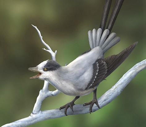 Cận cảnh loài chim cổ đại mới được phát hiện ở Trung Quốc.